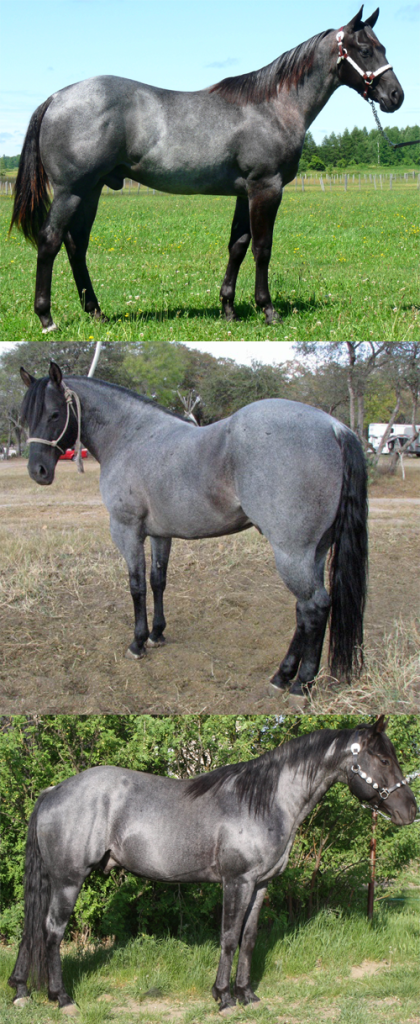 blue roan collage